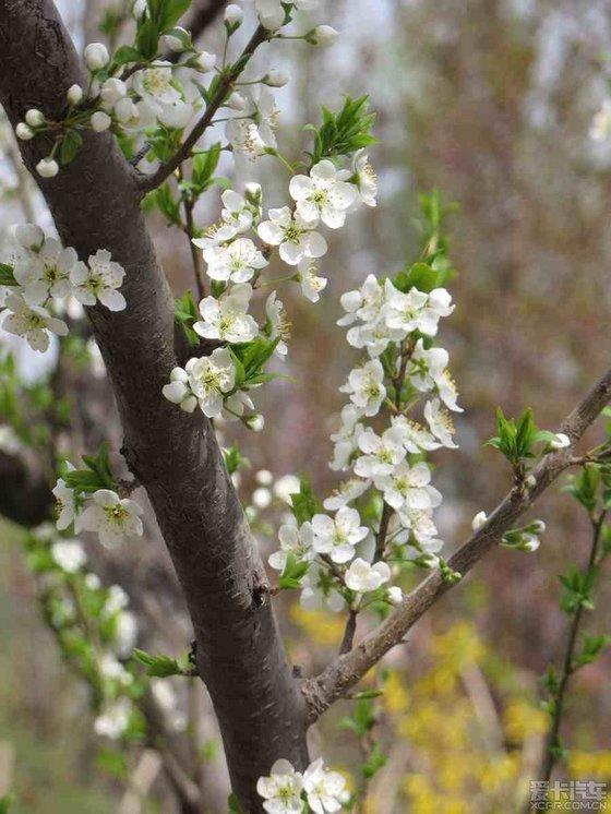 【春天来临的诗句】