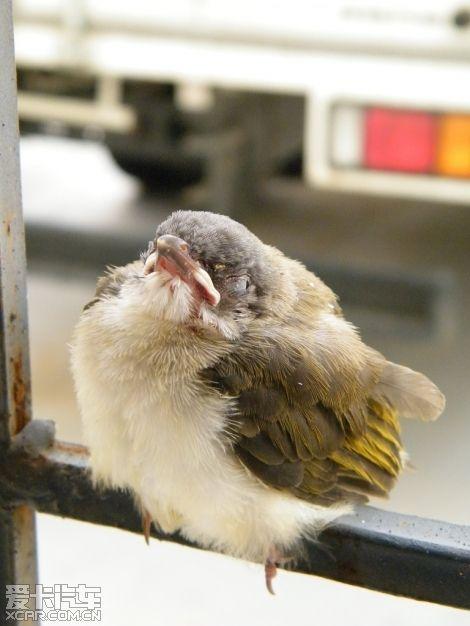 鸟类睁着眼睡觉
