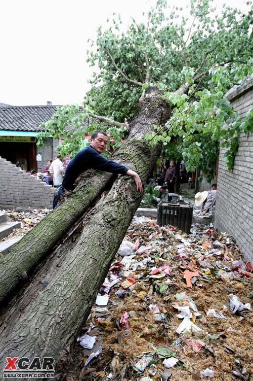 狂风大作 大树被连根拔起