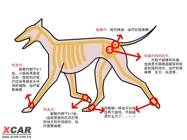 犬瘟热病辨证论治