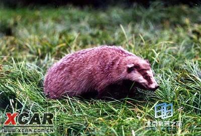 野兽, 哺乳动物,脚爪锐利,善掘土打洞,夜间活动.