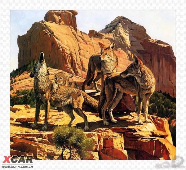 野生动物水彩画