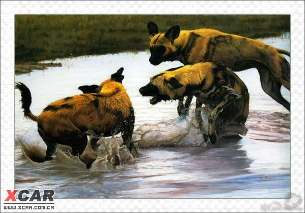 野生动物水彩画(48/105)