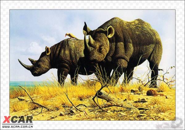 野生动物水彩画精华
