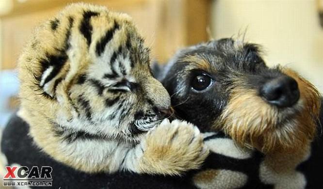 可爱搞笑的小动物们.