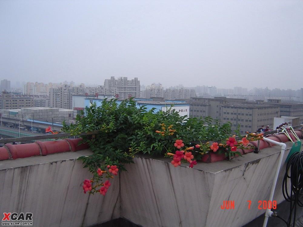 我家的屋頂花園