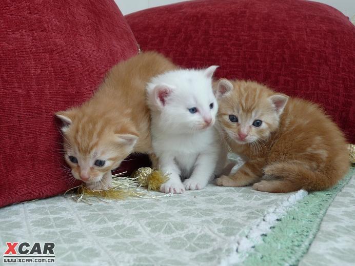 可爱小猫猫满月照,喜欢小动物的来看看吧