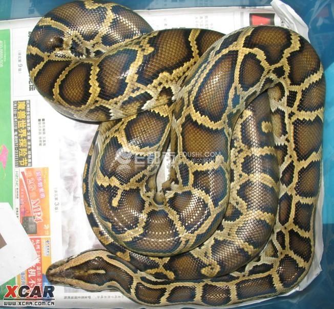 动物 蛇 652_603