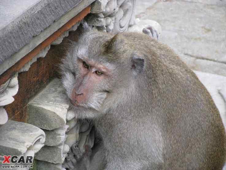 印尼美女,少儿,马不宜,美女杀鸡16,32,74楼(看过a美女光跑猴子猪图片图片