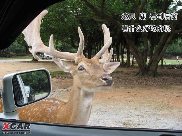 25东莞到番禺香江野生动物园