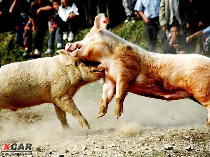 孕妇梦见蛇掐猪打架