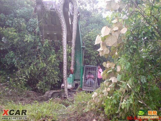 挖蛇事件_千斤挖蛇事件