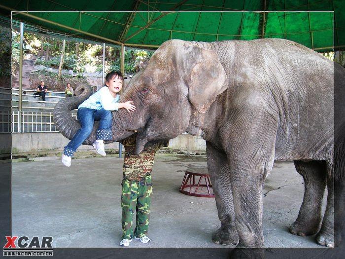 雅安碧峰峡野生动物园和上里古镇2日游