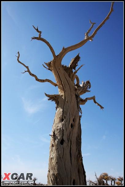 插图:怪树林