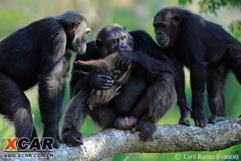 2008野外生态摄影大赛获奖作品之的动物行为