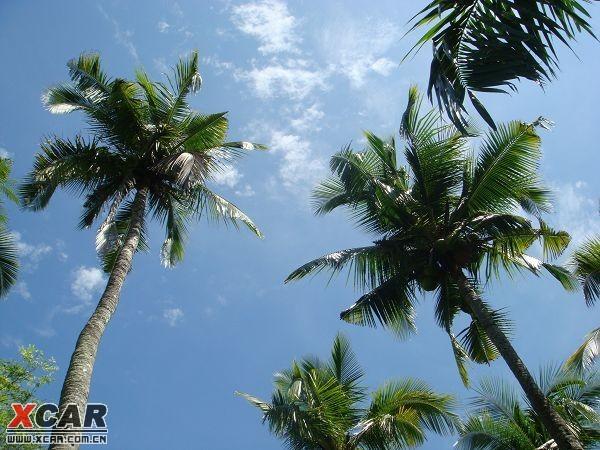 qq头像椰树风景