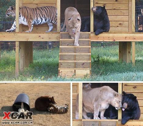 【有趣的动物至交:友谊没有不可能】