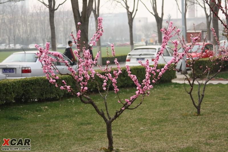 春天的花们精华