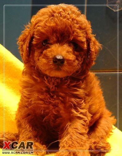 可爱的小狗,希望小熊版主喜欢吧 附件