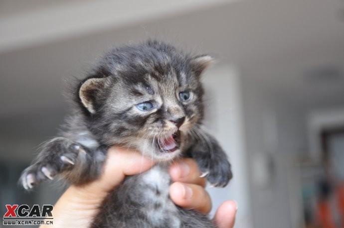 北京流浪猫收养的地方在哪?
