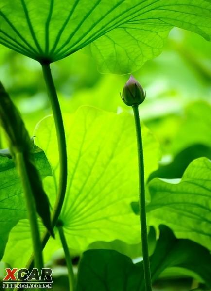 背景 壁纸 绿色 绿叶 树叶 植物 桌面 434_600 竖版 竖屏 手机