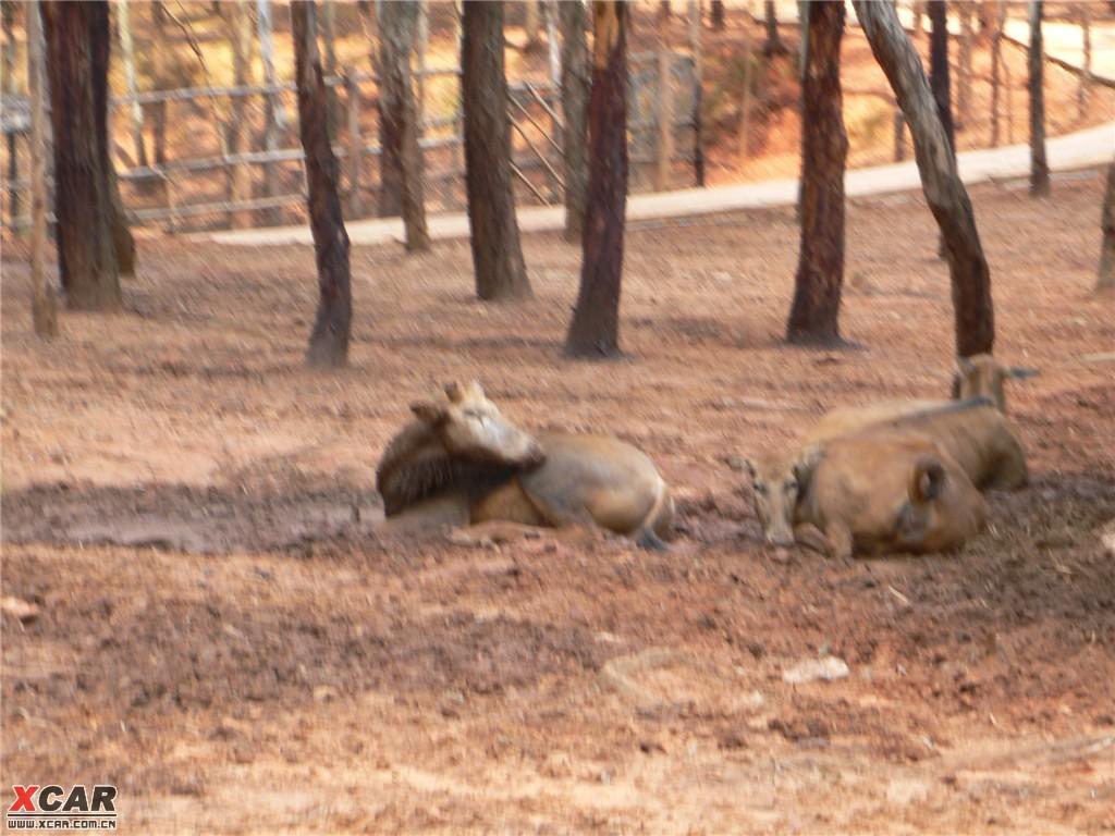 【精华】昆明野生动物园走马观鹿作业