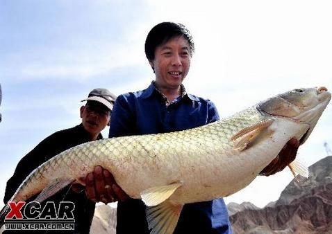 兰州垂钓爱好者钓到30斤重大草鱼