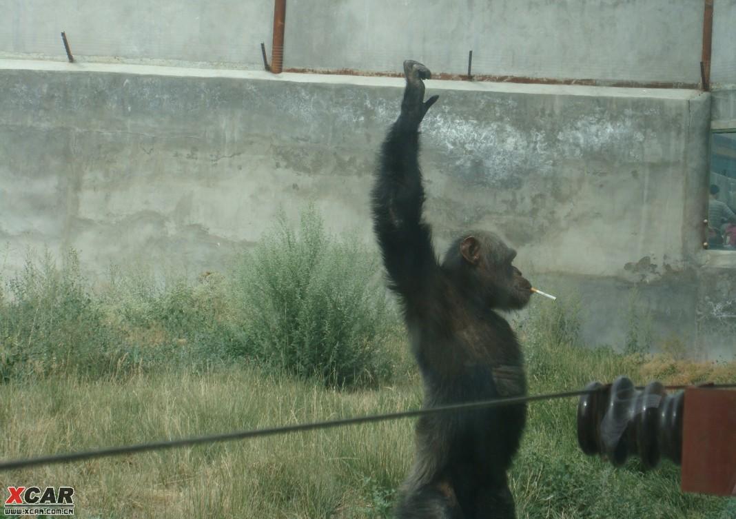 天山野生动物园一日游