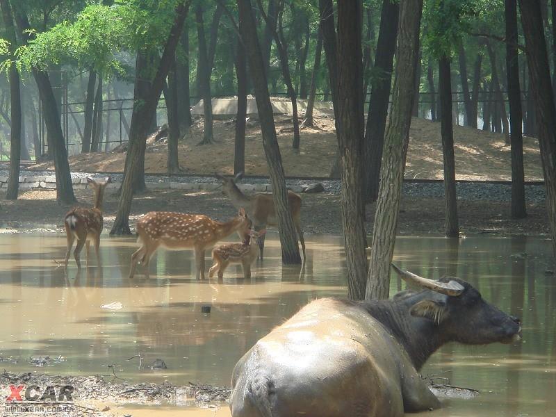 秦皇岛野生动物园_河北论坛