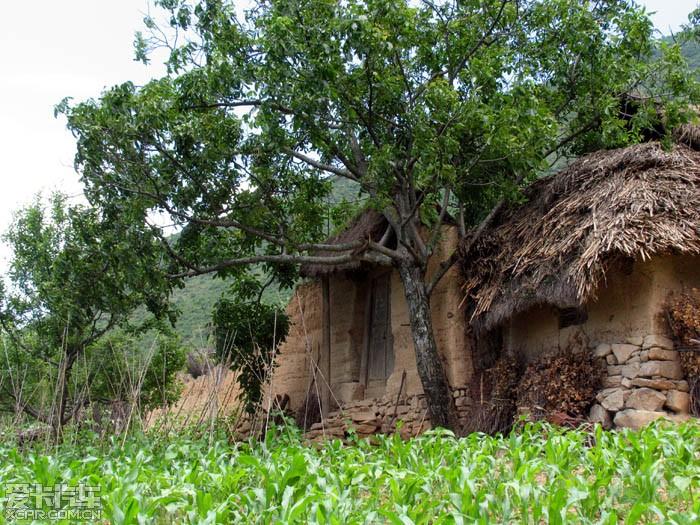 壁纸 树 700_525