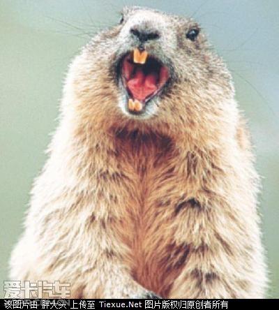 谁说动物不会笑 小动物们超滑稽的欢喜表情(组图)[帖