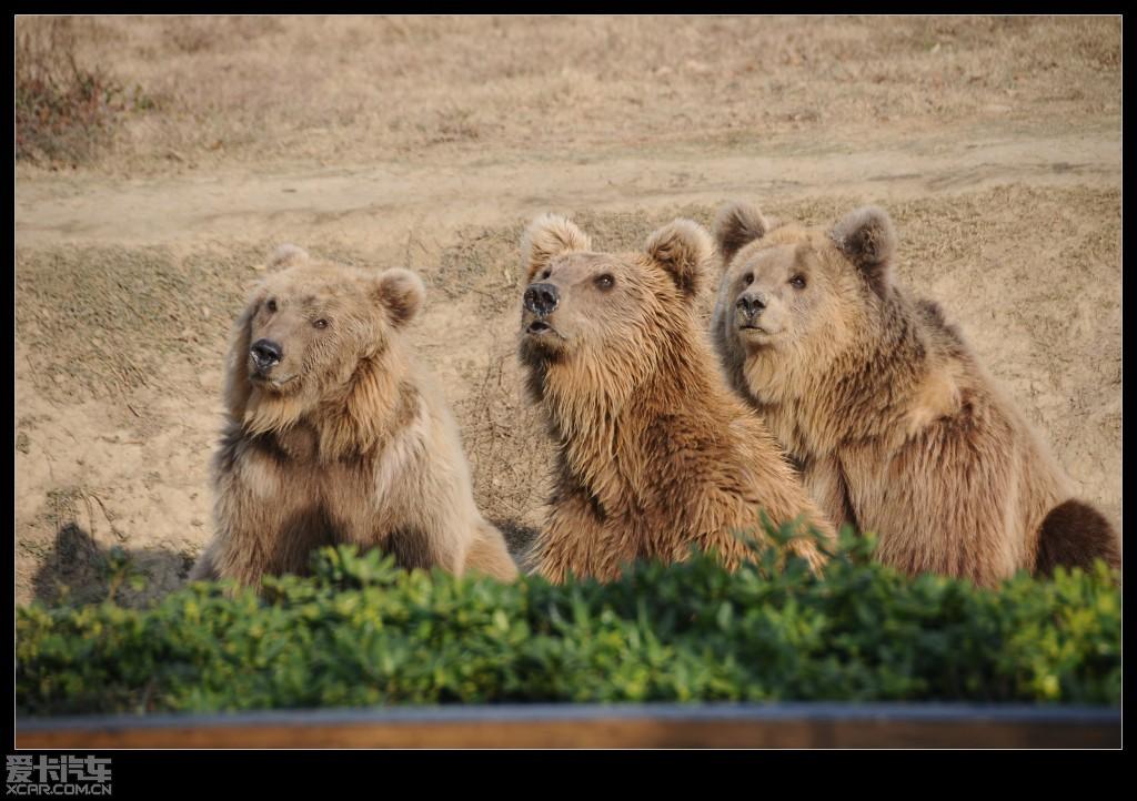 > 常州淹城动物园看图说话!