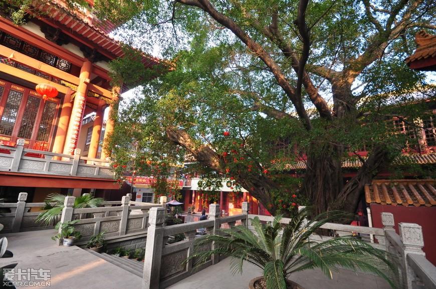赣州大榕树图片