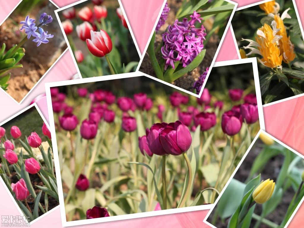 春天里的花儿@植物园