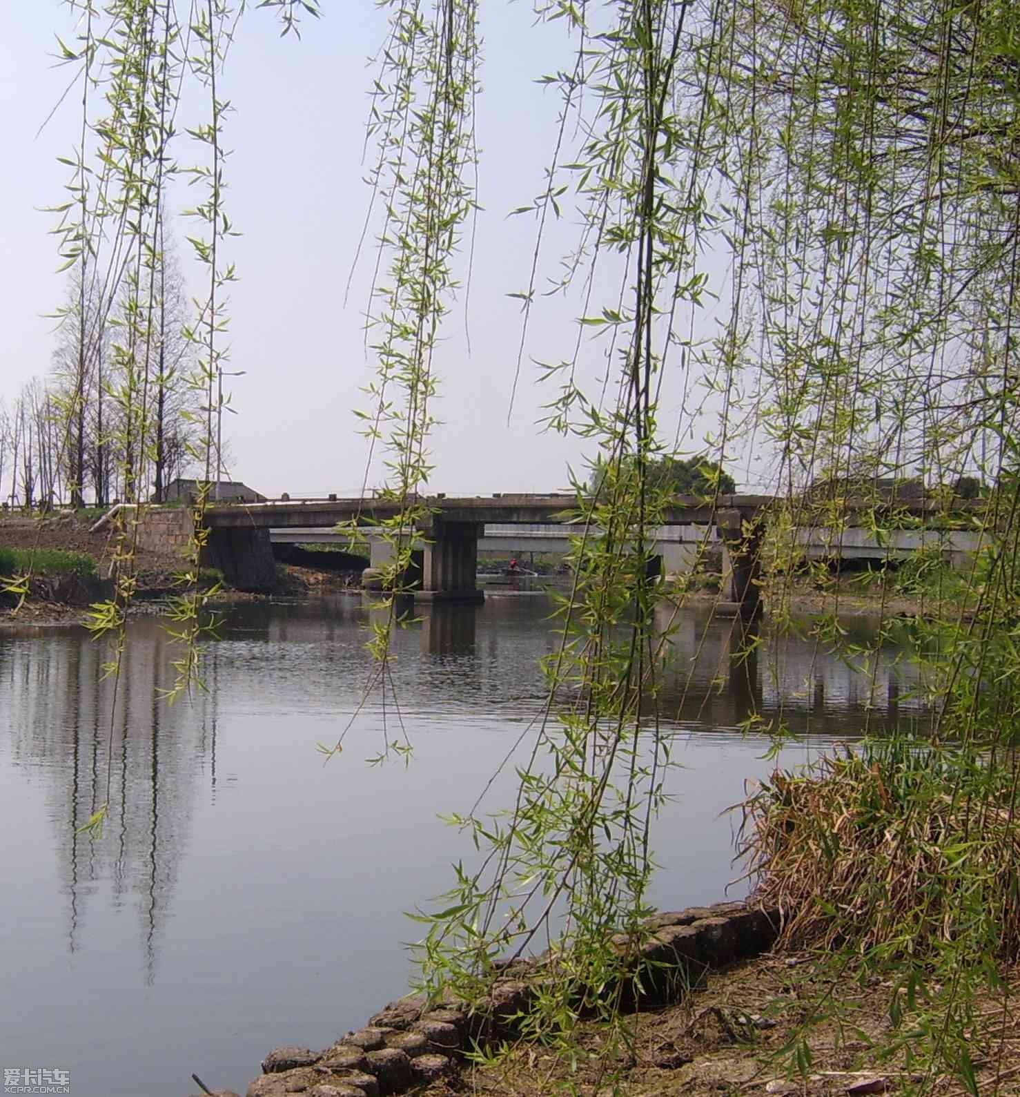 春天里柳树小河小桥简笔画