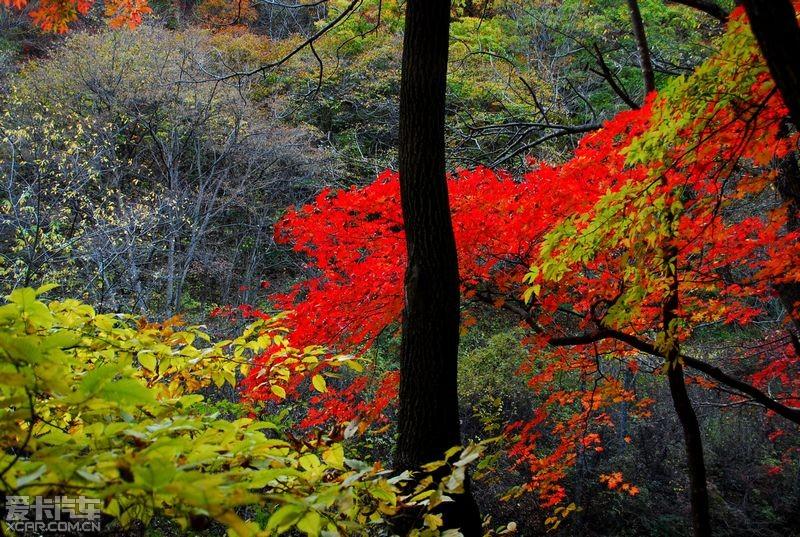 吉林 长白山风景区 长白山风景区 自助游论坛 记忆秋天的颜色(辉南