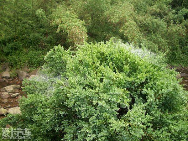 在小树丛上的蜘蛛网上还留有晨露