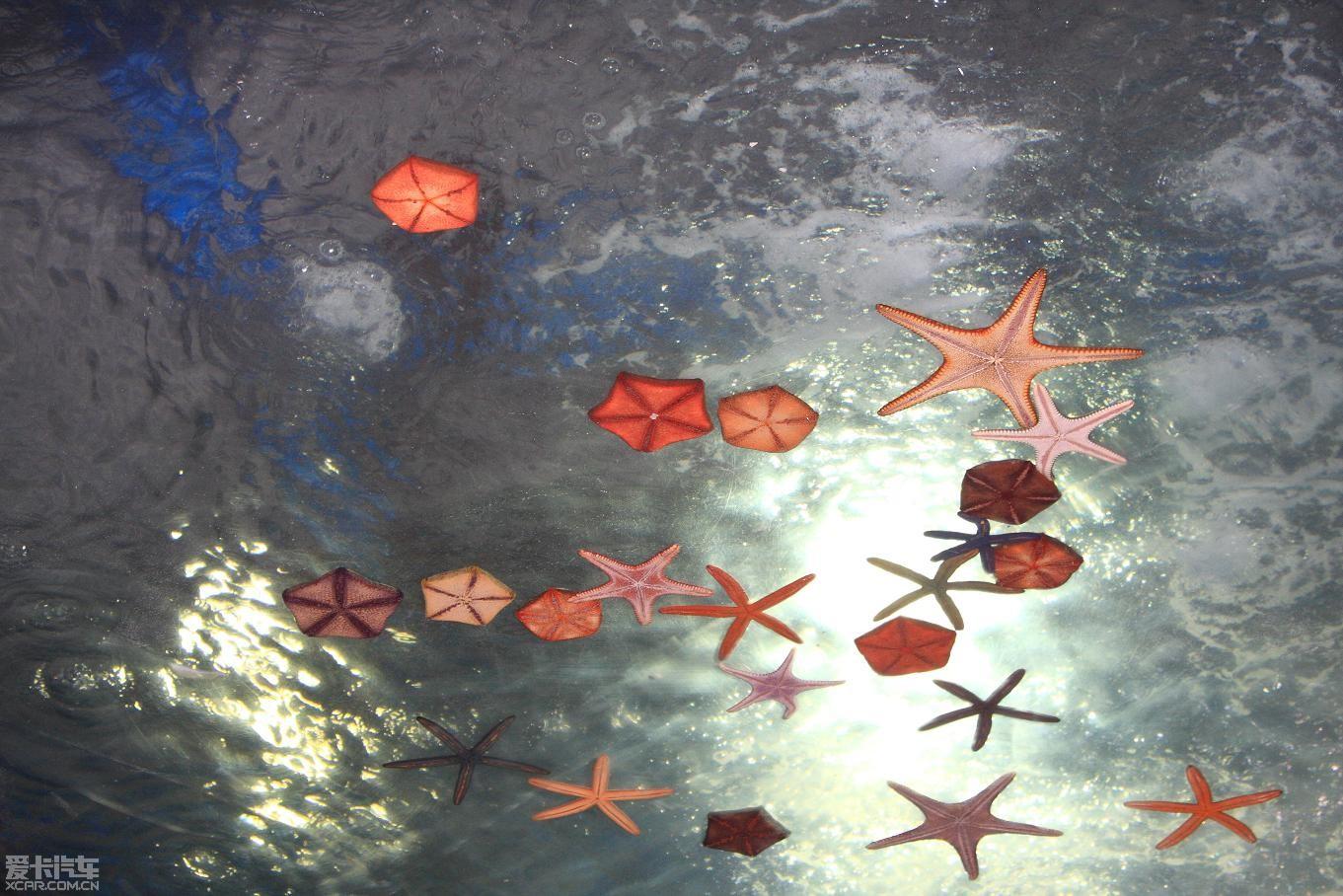 青岛海底世界精华