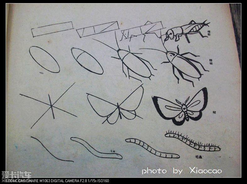 【精华】对简笔画感兴趣的tx可以进来看下-请问有同志对昆虫独角仙感