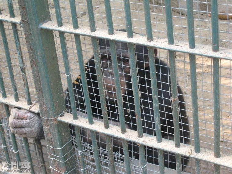 北京野生动物园一日游!精华