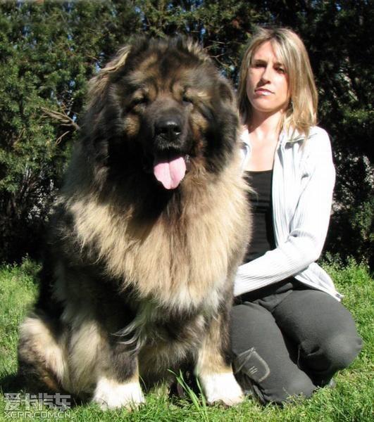体形最大的动物
