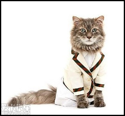 可爱小猫咪当模特_爱卡汽车