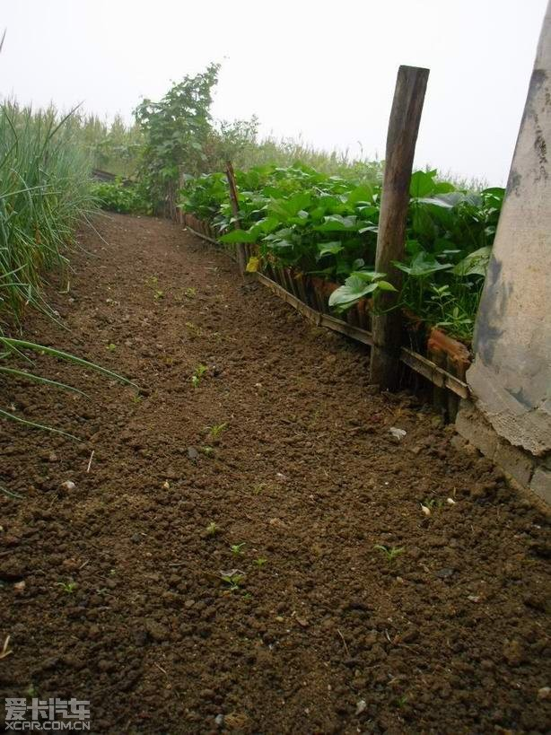 【精华】父亲的菜园。_河南FB专区
