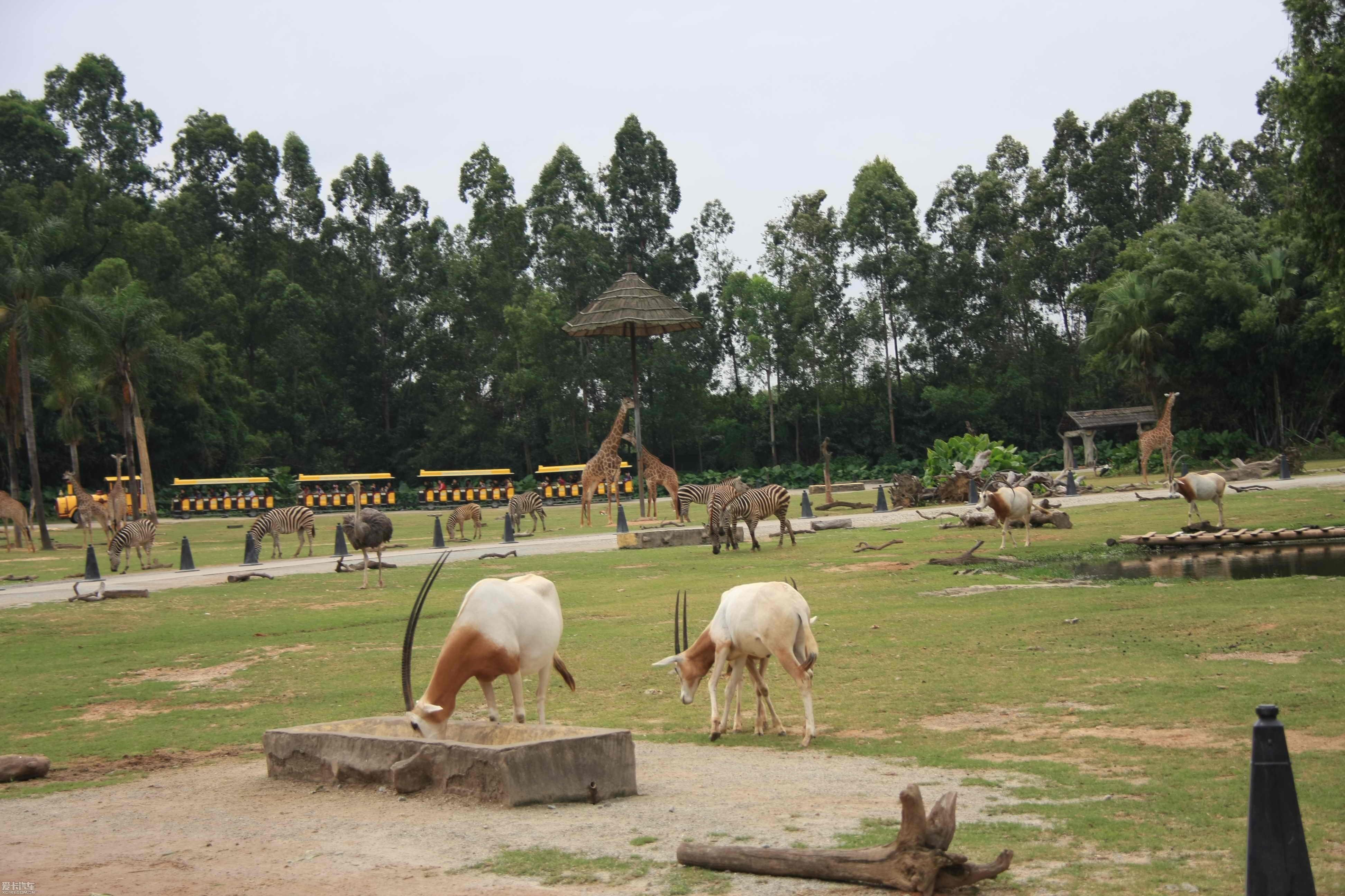 【精华】十一长假广州长隆旅游----野生动物园:)