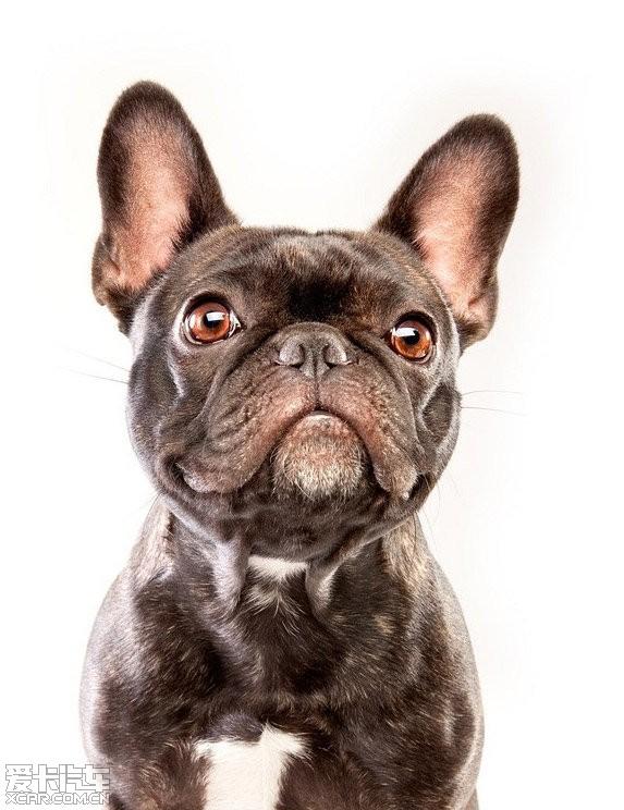 可爱的宠物狗摄影_mpv论坛