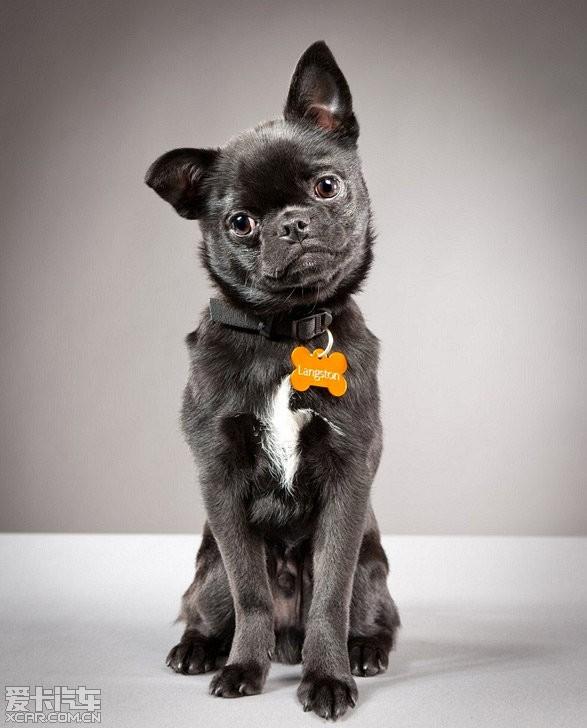 可爱的宠物狗摄影_mpv论坛|mpv联盟