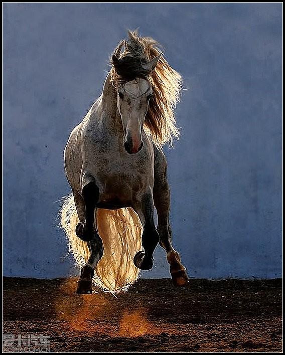马动物图片大全大图