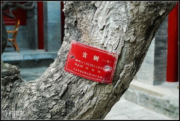 树上的古树牌是红色的,据介绍,红色的牌子代表树龄在300年以上,绿色