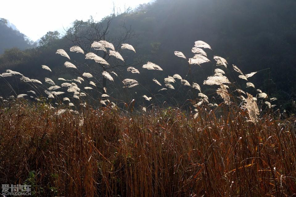 【精华】离离原上草,一岁一枯荣。(难道第三次