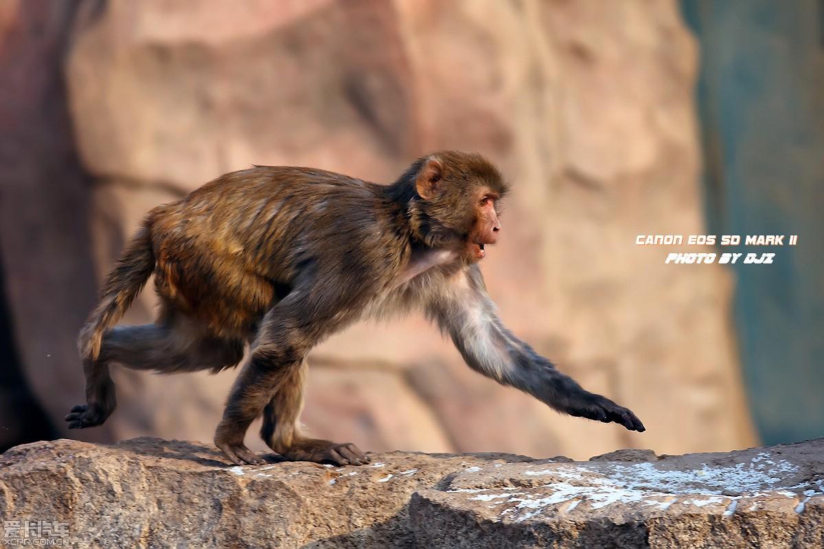青海野生动物园习作